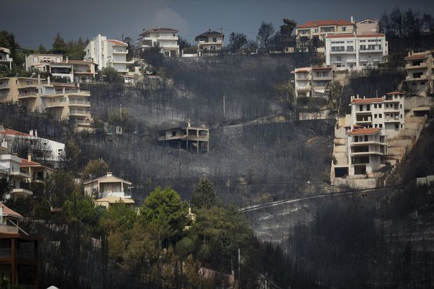 Εμείς και το δάσος. Δεκάδες χιλιάδες στρέμματα σε Μαραθώνα και Ραφήνα είχαν μετατραπεί σε αυθαίρετους