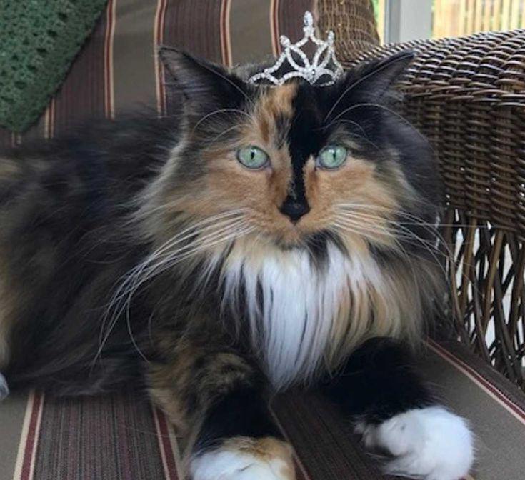 Diese Katze ist Bürgermeisterin eines US-Dorfes – das ist die kuriose Geschichte dahinter