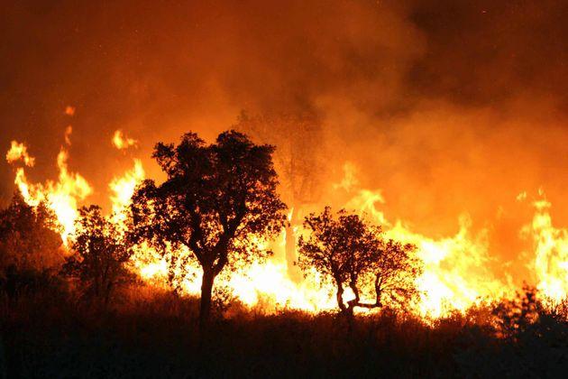 Des feux de forets à Tlemcen - Photo