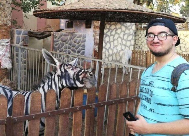 얼룩말 대신 줄무늬를 페인트칠한 당나귀를 전시한 의심을 받는 동물원이