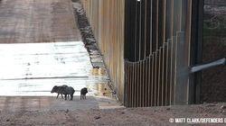 과학자들은 트럼프의 장벽이 야생동물에게 재앙이 될 거라고