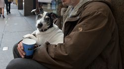 Heatstroke, Sunburn And Blistered Paws: Homeless Dogs Being Treated As UK