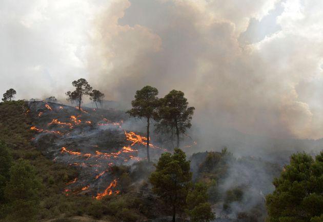 Un feu de forêt à Bordj Bou Arreridj - Photo