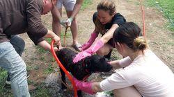 개농장에서 구조된 개들이 목욕을 한 뒤 보인