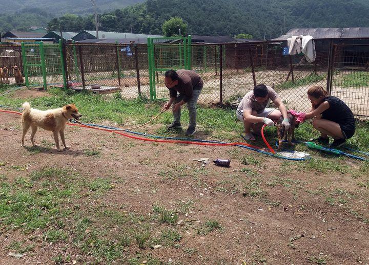 자원봉사자들이 28일 대형견 목욕봉사를 하고 있다.