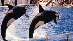 Thomas Cook Will Stop Selling Tickets To SeaWorld Over Animal Welfare Concerns