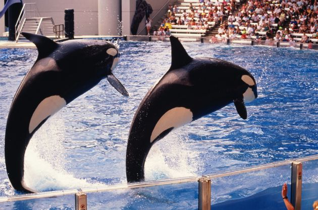 Travel firm Thomas Cook will stop selling tickets to SeaWorld from next summer, it announced on