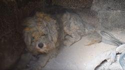 Σκυλάκι επιβίωσε της φωτιάς στο Μάτι μέσα σε φούρνο όπου έμεινε κρυμμένο μέχρι το να βρουν