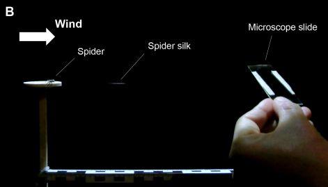 거미의 비행을 관찰한 풍동 실험실의