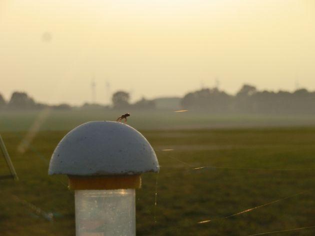 날개도 없는 거미가 수백 km의 거리를 비행할 수 있는