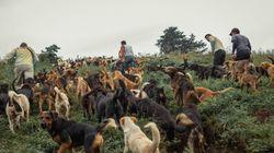 Costa Rica: Auf diesem Berg leben Tausend Hunde – aus einem besonderen