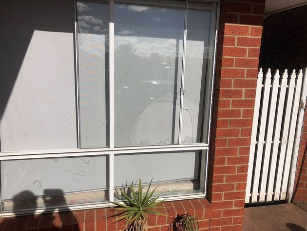 Entry point: The kangaroo broke a window and entered the house late on Saturday