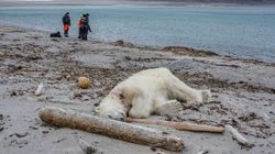 Backlash As Polar Bear Is Shot Dead After Attacking Cruise Ship