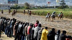 L'inexorable déclin du hippisme en Algérie, appauvri et mal