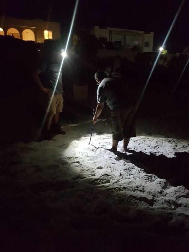 Une tortue de mer pond ses oeufs au milieu de la plage El Fatha à Kélibia (VIDÉOS,