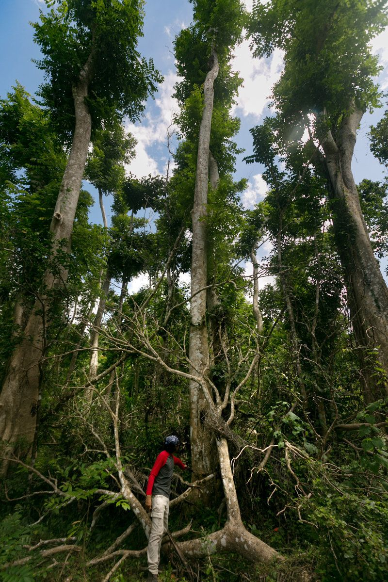 Rey Cruz Aguilar, a graduate student in ecology at the University of Puerto Rico-Mayaguez, shows off three large African Tuli