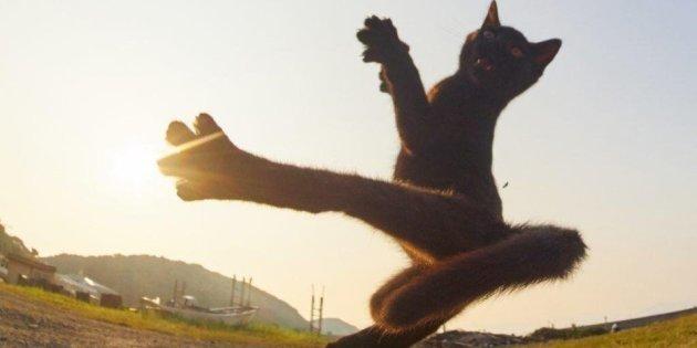 Ce chat qui met un high kick vaut le détour(nement)