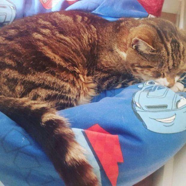 13년 만에 집에 돌아온 고양이가 3일 후 세상을