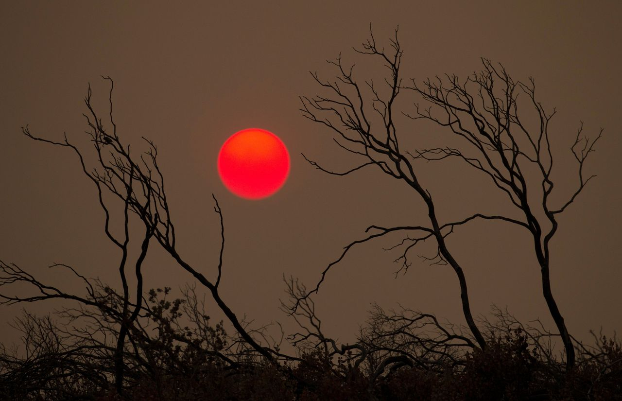 Wildfires burning throughout California have left death and destruction in their wake.