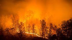 Feux de forêts: 1100 hectares ravagés depuis le 1er juin au niveau