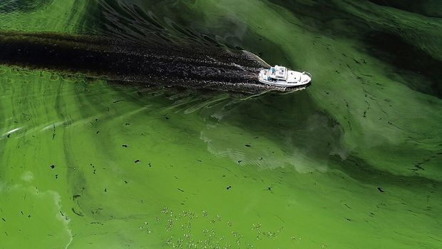 A boat sails through a deepening algae bloom across the Caloosahatchee River on June 27, 2018, in Labelle, Fla. (Pedro Portal/Miami Herald/TNS via Getty Images)