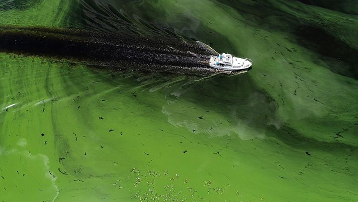 A boat sails through a deepening algae bloom across the Caloosahatchee River in Labelle, Florida, on June 27.