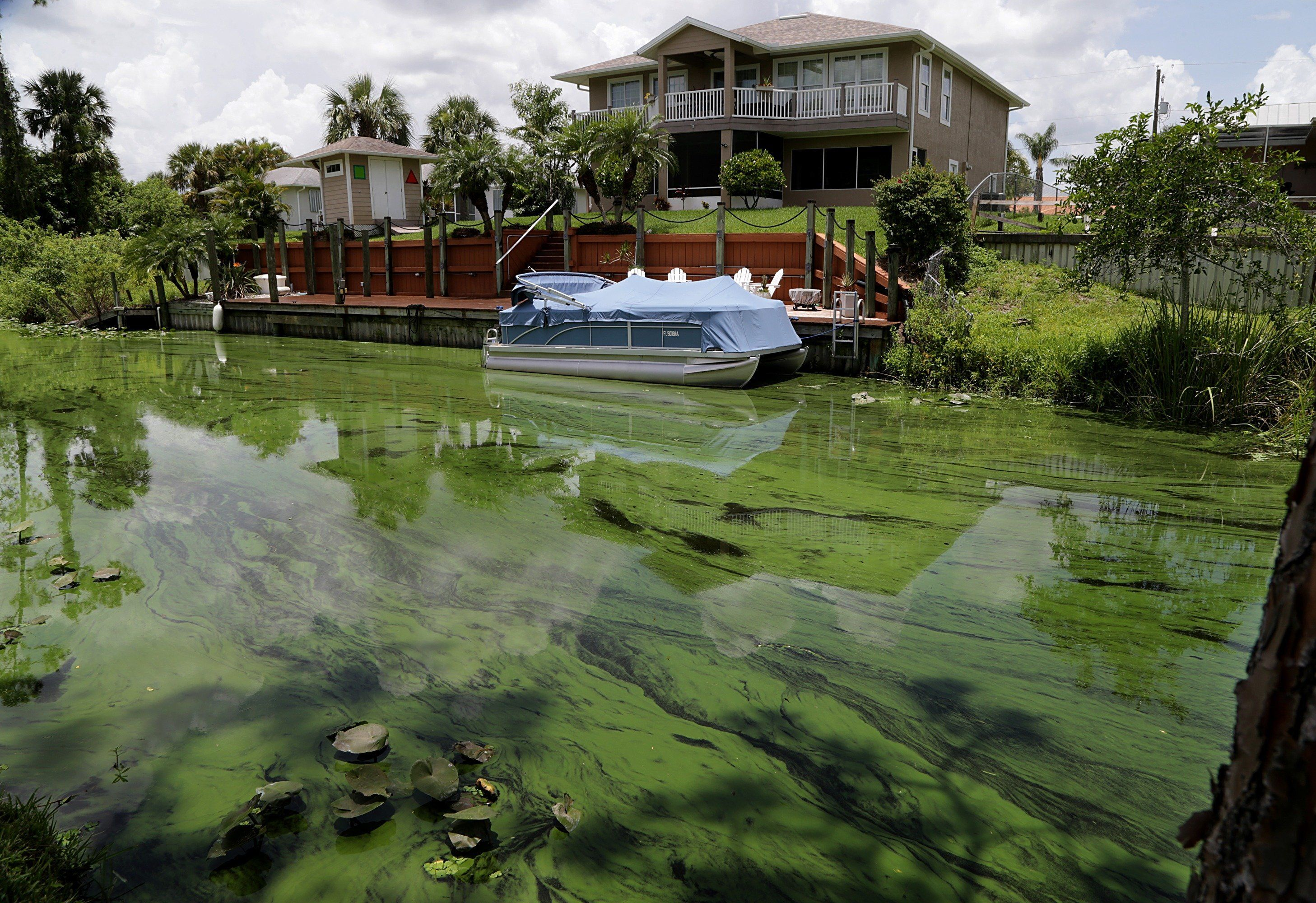 A deepening algae bloom seen at a canal behind houses on the south side of Calooshatchee River in the River Oaks on June 27