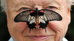 David Attenborough's Big Butterfly Count Meadow Accidentally Flattened By Council