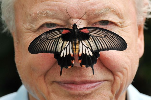 Butterfly Conservation President Sir David Attenborough with a south east Asian Great Mormon Butterfly...