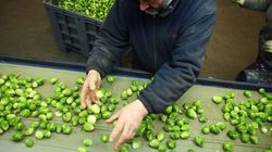 Christmas Dinner Could Be Missing A Key Ingredient As Farmers Warn Of A Brussels Sprout Shortage