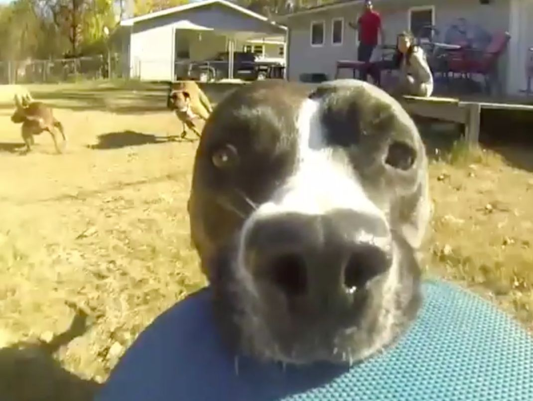 5 Cute Animal Pictures (And Videos) To End The Week: Dog Steals Go-Pro And 'The