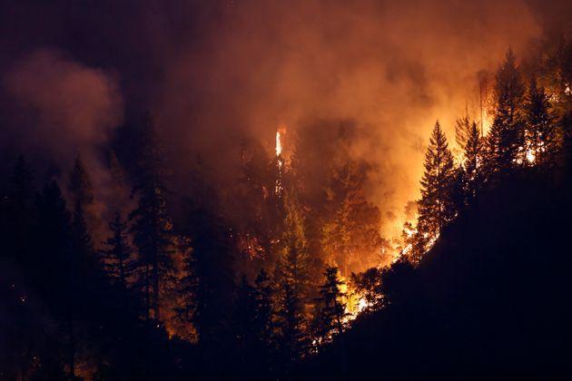 Feux de forêts: 1.263 hectares parcourus par le feux depuis