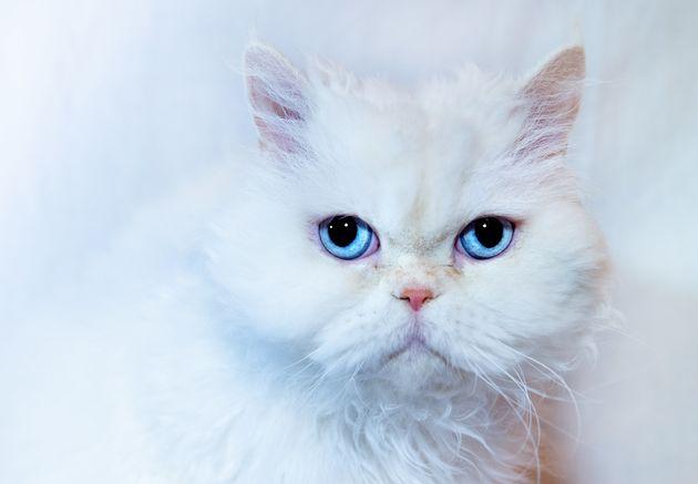 Ο ήρωας Τίο ανακηρύχθηκε «Βρετανός Γάτος της Χρονιάς» μετά θάνατον γιατί είχε καταφέρει να σώσει την...