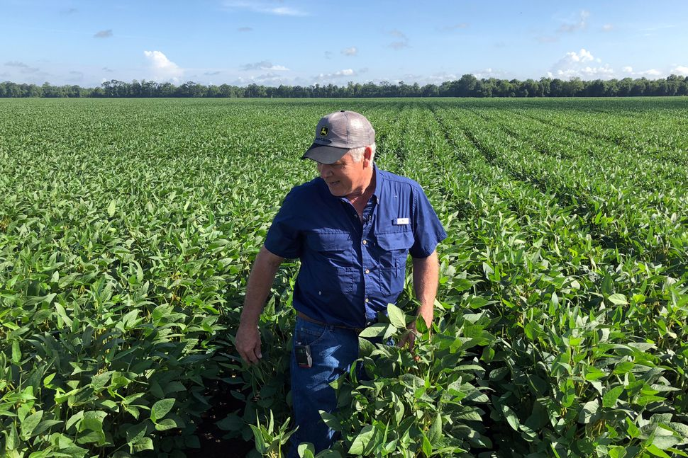 Soybean farmer Raymond Schexnayder Jr. checks out his crops.
