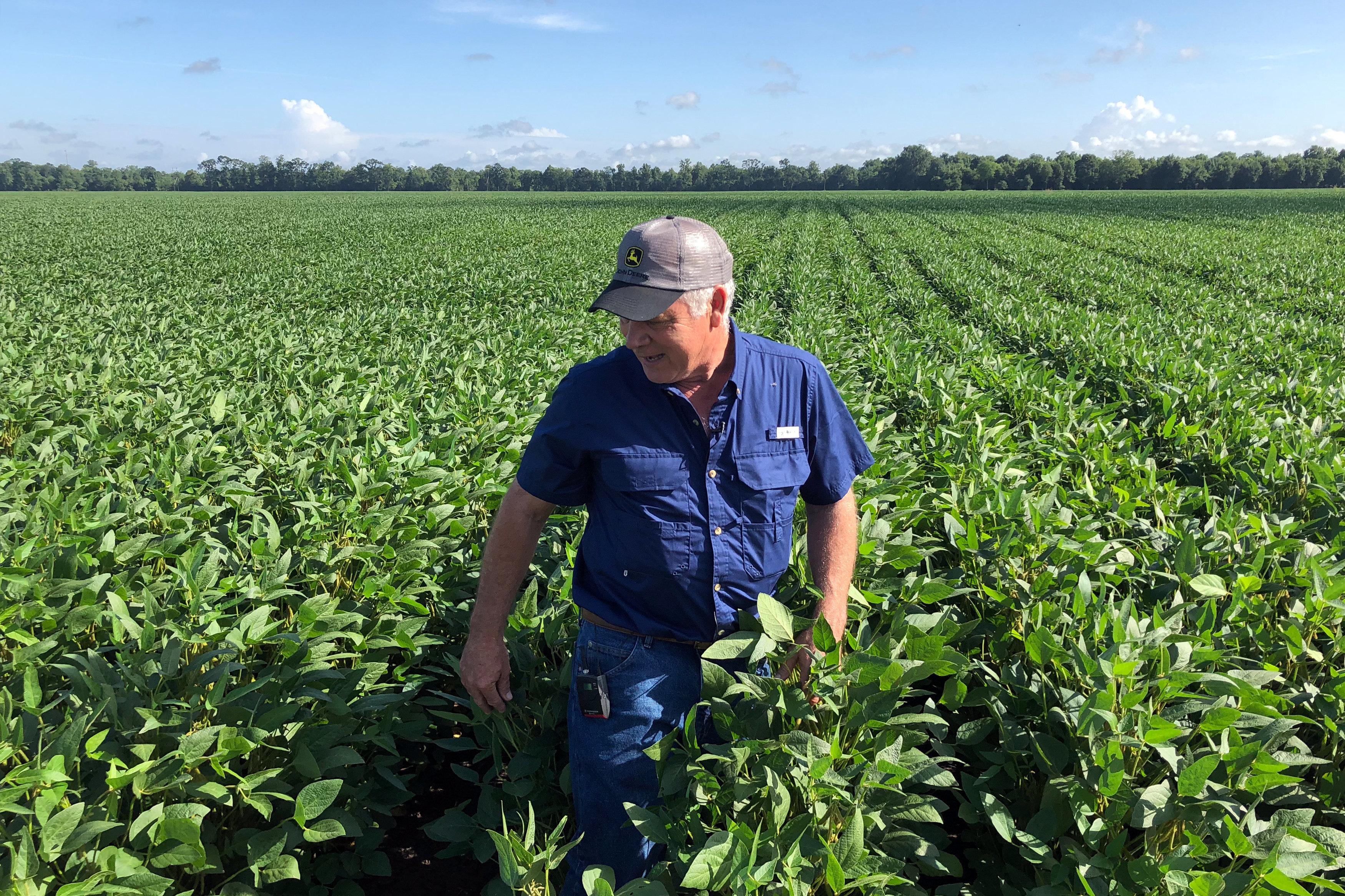 Soybean farmer Raymond Schexnayder Jr. overlooks his farm outside Baton Rouge, in Erwinville, Louisiana, U.S., July 9,2018.   Picture taken July 9, 2018.   REUTERS/Aleksandra Michalska