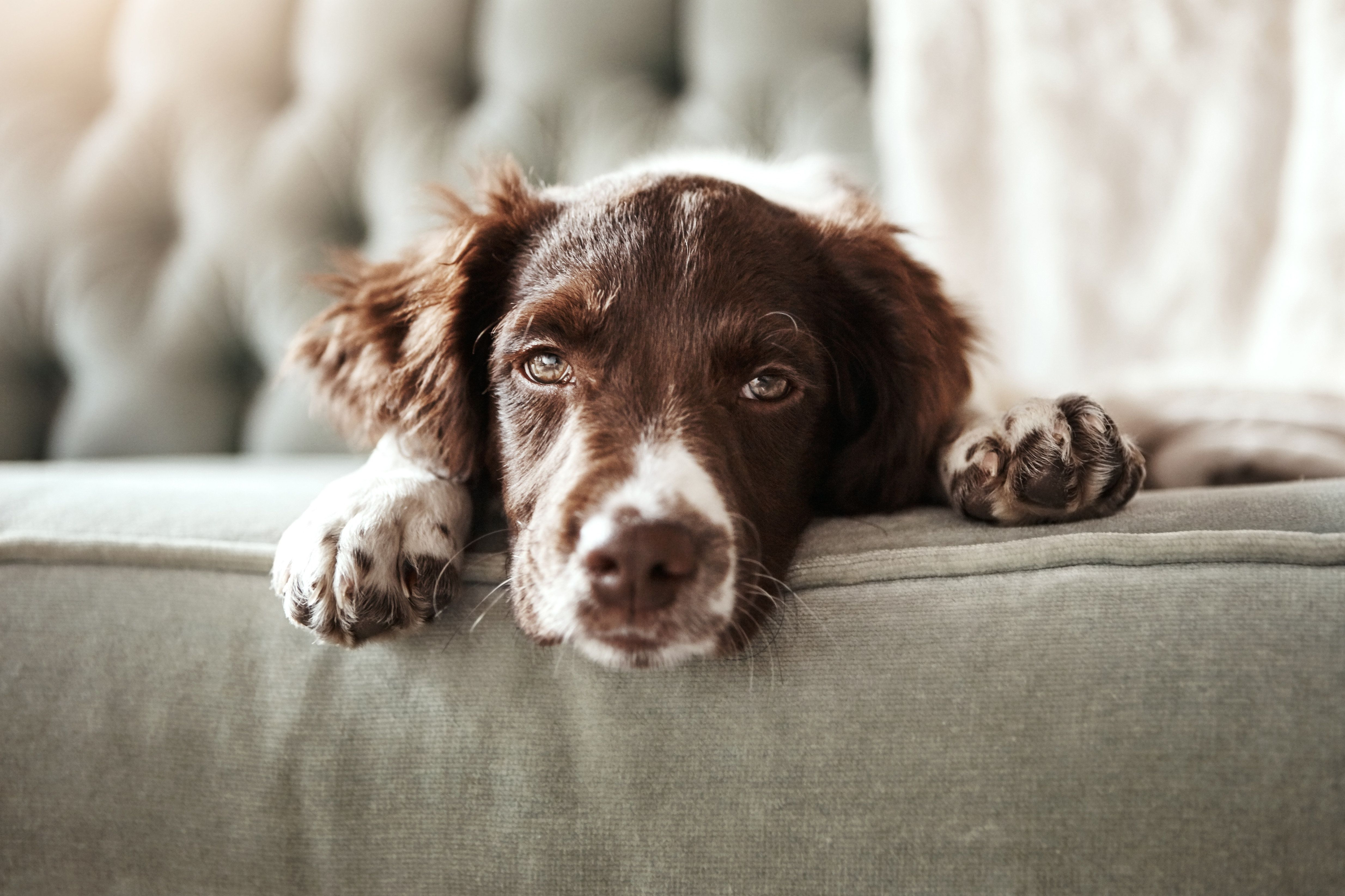 Please Don't Give Up Your Pet Over The Fear Of Dog-Lick