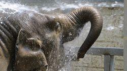 '열대관에도 에어콘, 코끼리에 매일 수박 3통' 동물원 힘겨운 여름