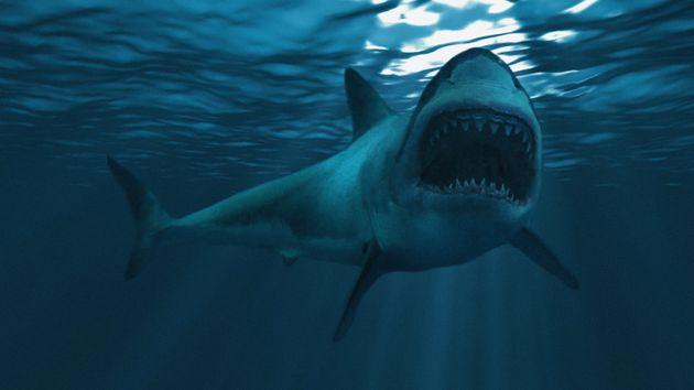 Un touriste tué par un requin dans une station balnéaire en