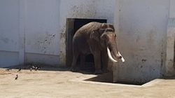 48년 된 대구 달성공원 동물원에 사는 동물들은 폭염을 이렇게 보낸다