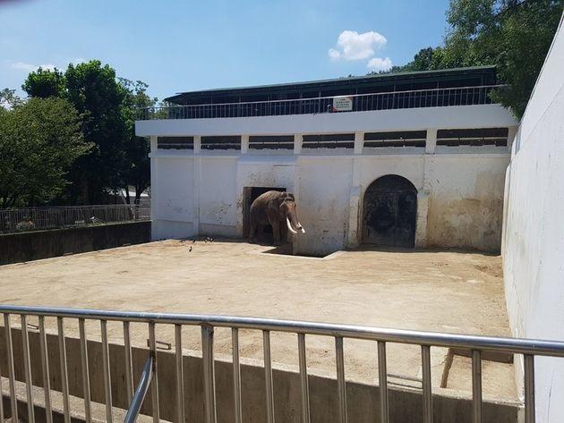 2일 낮 12시께 대구 중구 달성공원 동물원 코끼리사에서 아시아 코끼리가 내실 건물 입구에 생긴 작은 그늘에서 햇볕을 피하고