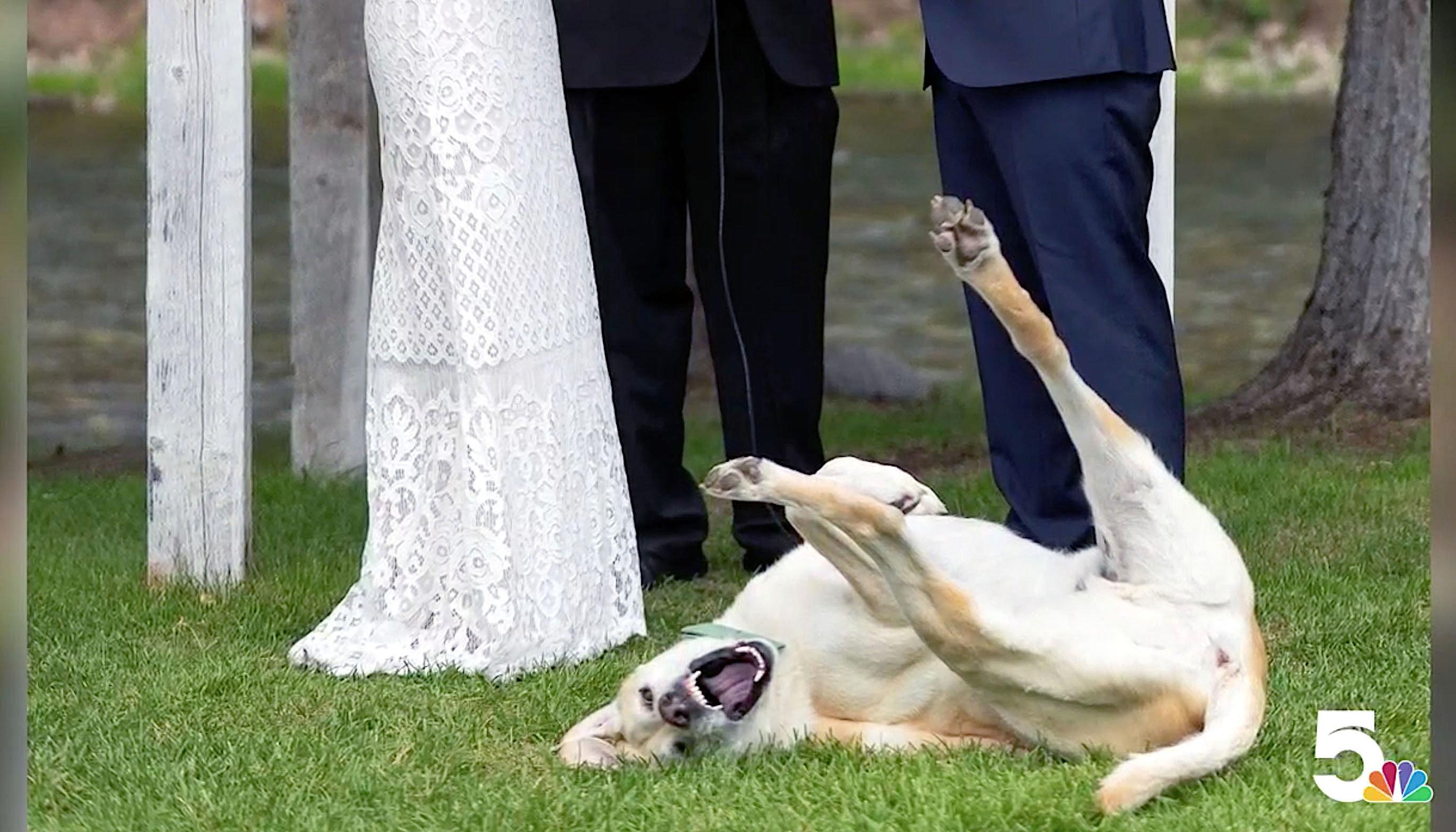 Boone enjoyed the wedding of Angie and Jayce Blumberg