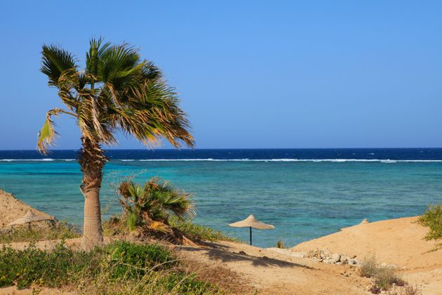 The man is believed to have been attacked 20km north of Marsa Alam (file