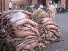 Aid Al Adha: le ministère de l'Industrie organise une opération de collecte des peaux de