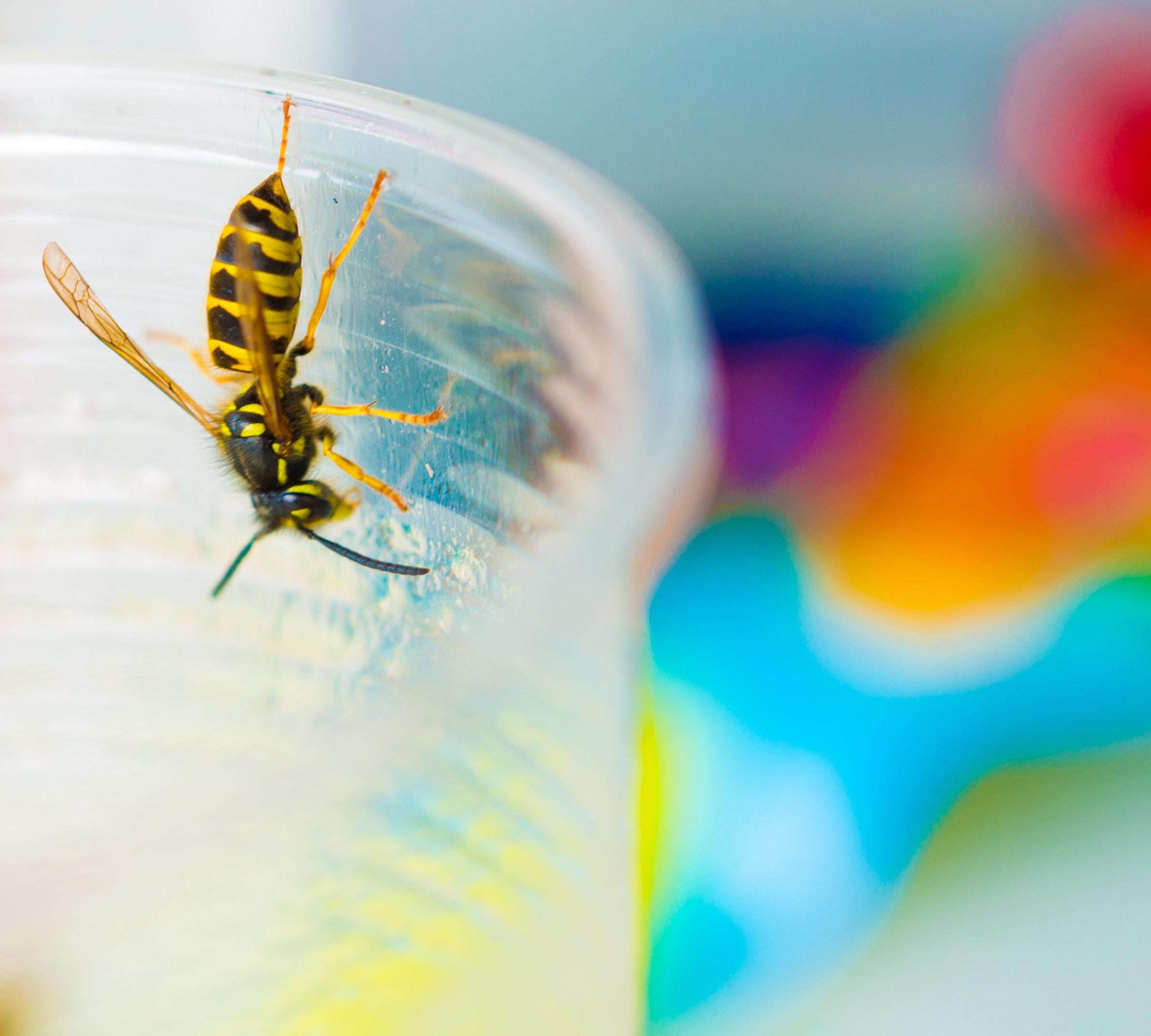 Hausmittel gegen Wespen: So vertreibt ihr die Insekten am effektivsten