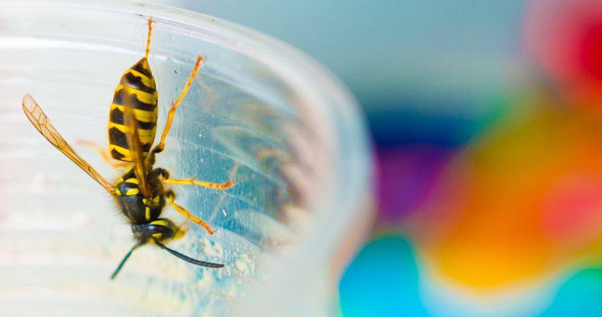 hausmittel gegen wespen so vertreibt ihr die insekten am effektivsten huffpost deutschland. Black Bedroom Furniture Sets. Home Design Ideas