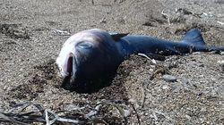 Des poissons morts échoués sur la plage de Gabès (VIDÉO,