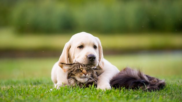 Revealed: The Top Cat And Dog Names Of