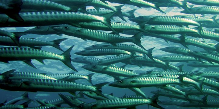 Some fish are losing their sense of smell. Climate change is to blame.