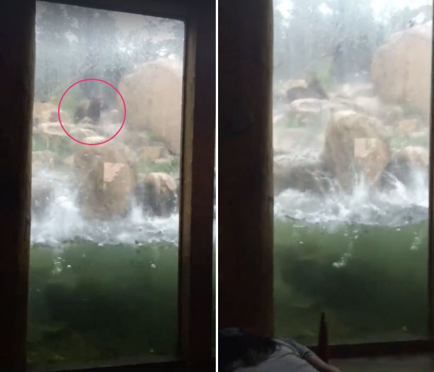 One of two bears (left) is seen attempting to dodge hail as it pounded the Cheyenne Mountain Zoo in Colorado Springs on Monda