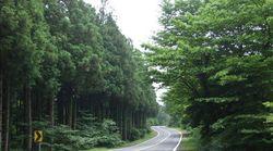 전국에서 가장 아름다운 도로인 제주 '비자림로'의 삼나무가 잘려나갔다